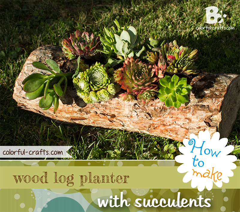 How to make a wood log planter with succulents